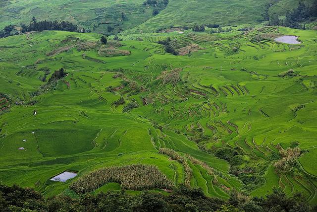 The rice terraces of Yuanyang County in Yunnan, China.