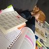 Study buddy. #catsitting #catsofinstagram