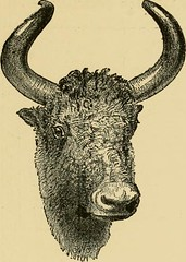"Image from page 252 of ""Horn measurements and weights of the great game of the world: being a record for the use of sportsmen and naturalists"" (1892)"