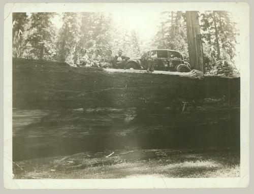 Car and tree