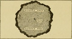 """Image from page 18 of """"Forest protection"""" (1922)"""