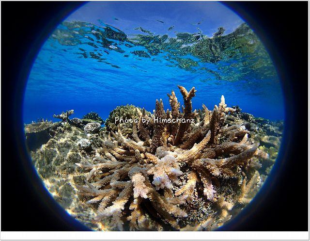 サンゴがとっても美しかった!