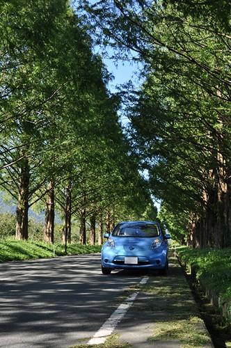 第3回EV・PHV写真コンテスト 優秀賞「メタセコイアの道は静かに走ろう」
