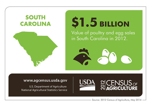 No matter which came first, poultry and eggs aren't chicken feed for South Carolina.  With more than a billion in sales, that a lot of scratch.  Check in next Thursday for more results from the 2012 Census of Agriculture.
