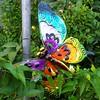 Butterfly sculpture in Somerville #yardart #somerville #butterfly #sculpture #garden