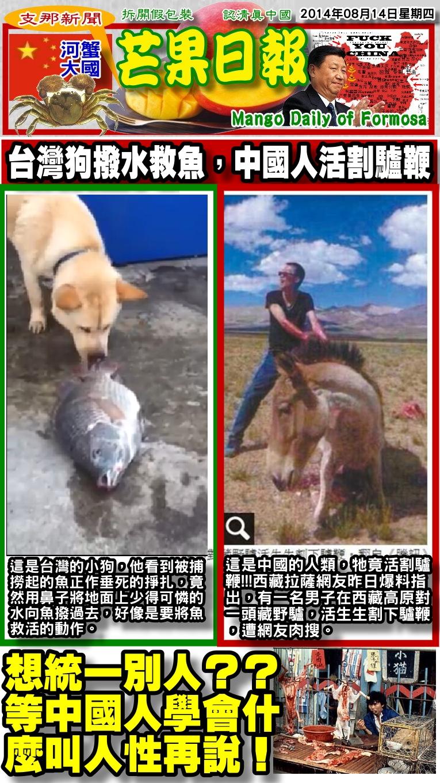 140814芒果日報--支那新聞--台灣狗潑水救魚,支那人活割驢鞭