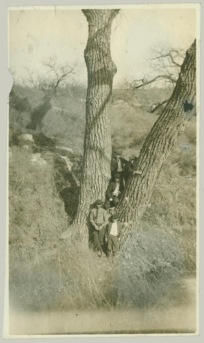 Men in a tree