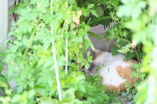 東京路地裏散歩 東池袋のネコ 2014年8月15日