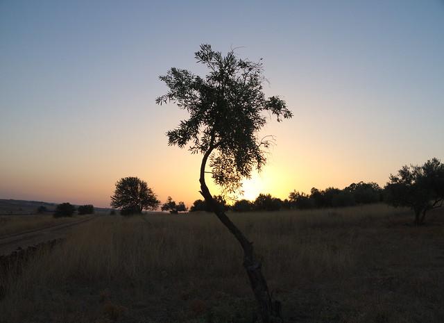 Vom Sonnenaufgang...