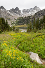 Wildflowers and Lonesome Lake