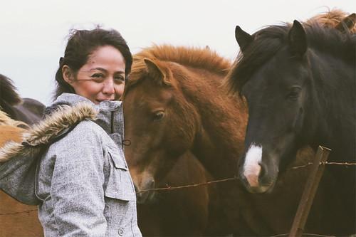 Iceland horse2