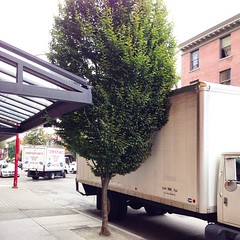 Urban trees can't get any respect these days. #urbannature