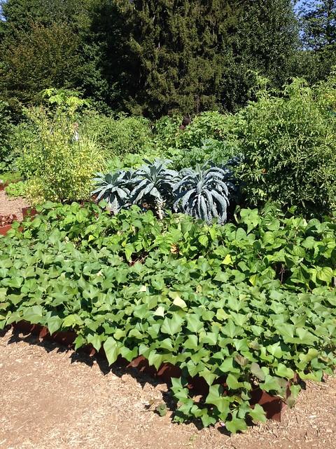 whitehouse kitchen garden