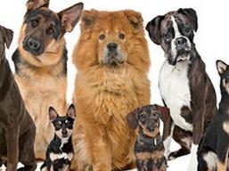 dog_breeds