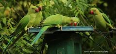 5 Feeding Birds