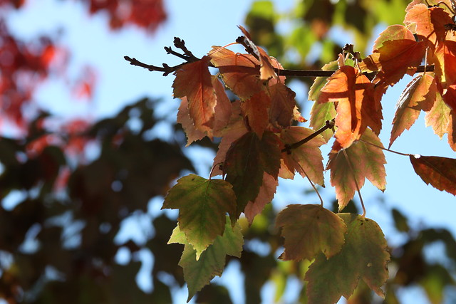 Fall, Canon EOS 50D, Canon EF 28-135mm f/3.5-5.6 IS