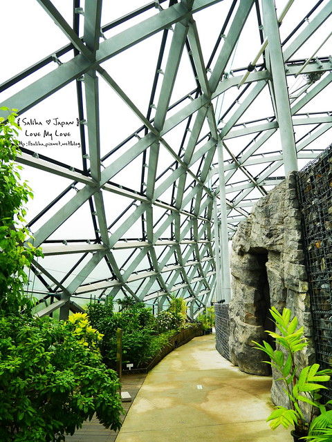 日本東京景點新宿御苑溫室植物 (31)