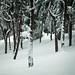 pejzaz: winter love