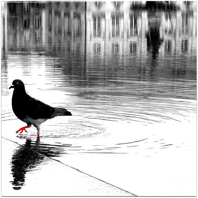 pigeon.com a test pour, Panasonic DMC-GM5, LUMIX G VARIO 12-32mm F3.5-5.6