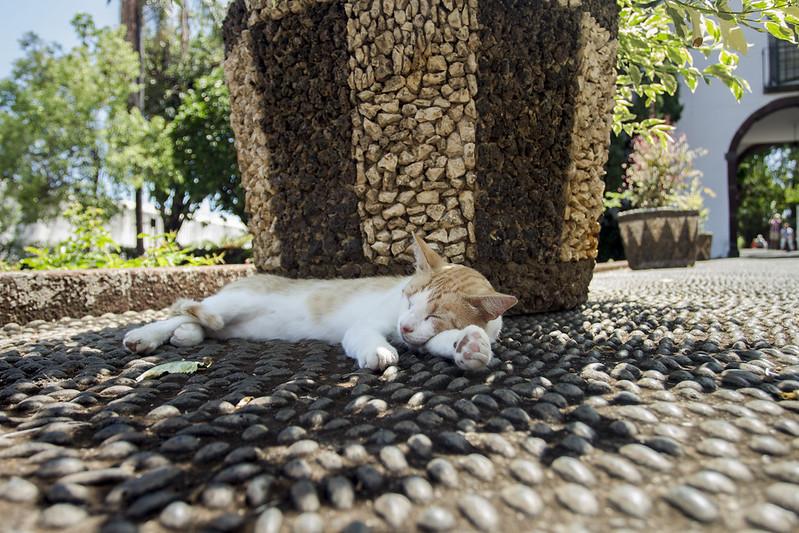 Cat in Quinta das Cruzes - Funchal, Madeira