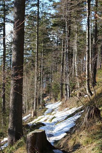 Winter im Schwarzwald III