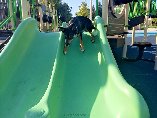 Dog going down a slide.