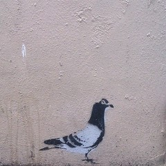 Pigeon #Margate #street #art #urban #graffiti