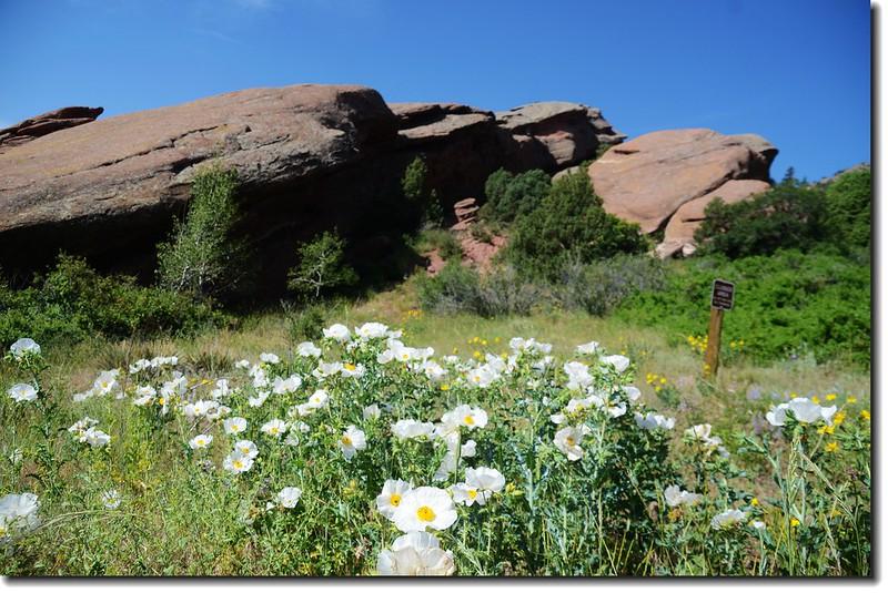 Red Rocks Trail 2