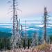 Montana by Zndrsn