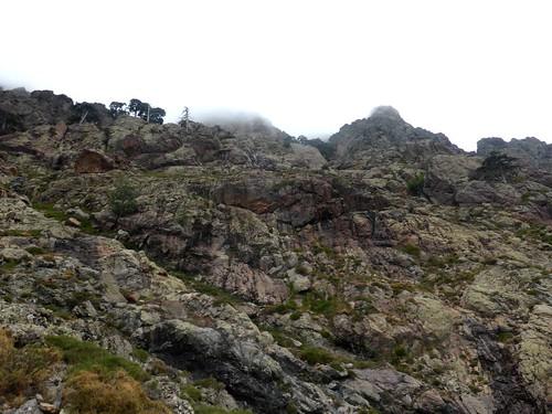 Piton rocheux 1358m : le versant embrumé au-dessus avec les bosquets de pins laricios