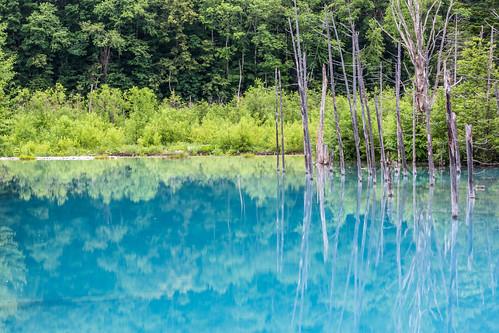 reflection tree water japan canon landscape pond hokkaido 100mm 北海道 日本 biei 風景 美瑛 倒影 青池 bluepond 白金温泉 canoneos5dmarkiii 5dmarkiii 青い池