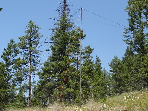 QRP-NVIS-2 looking up hill at 22' fiberglass mast