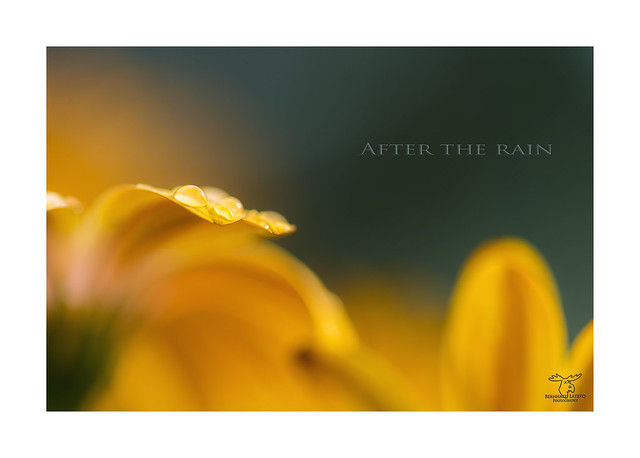 Header of After the Rain