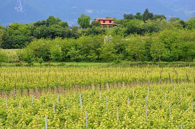 Franciacorte vineyards, Lake Iseo, walking in the Italian Lakes