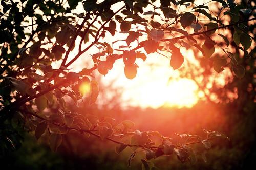 trees light sunset summer orange sun tree nature leaves sunrise branches poland polska natura orchard światło lato drzewa gałęzie wojnówko