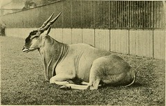 "Image from page 237 of ""Animal Life and the World of Nature; A magazine of Natural History"" (1902)"