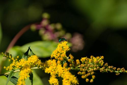 09878 Cukuu Wasp