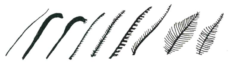 如何分辨蛾與蝶?看觸角就知道。蝴蝶的觸角成棍棒狀,蛾的觸角則較為多樣。(圖片來源:特生中心)