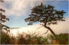 Fog Tree Rosario Point