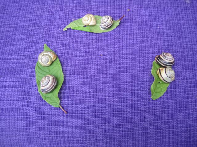 Snegle på blad
