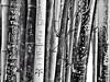 Bambu love