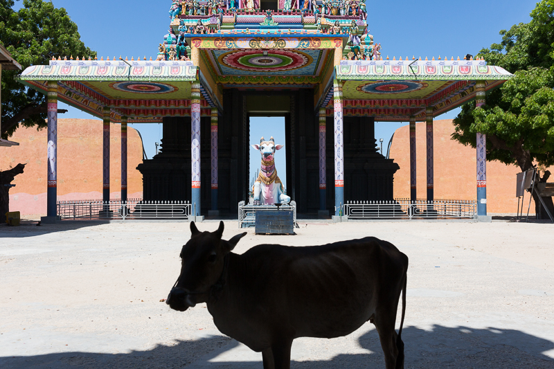 Cow, Nainativu