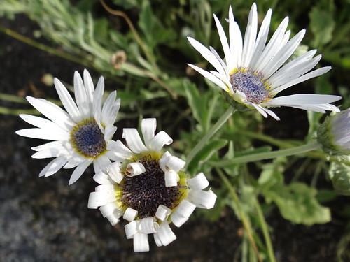 Botanischer-Garten-01290