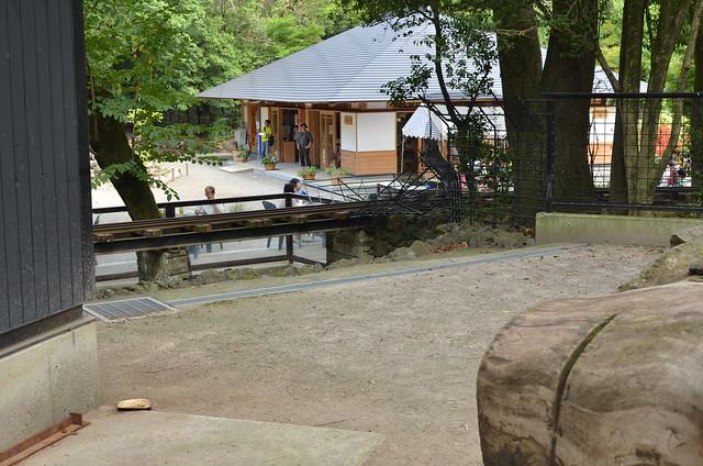 夏の青春18きっぷ旅 三島編 楽寿園のカピバラ 2014年8月22日