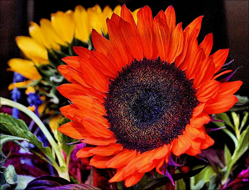 Floral Glow - Blütenglühen - Arrebol floral
