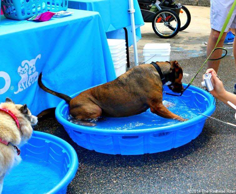 31st Annual Carytown Watermelon Festival,  Richmond, Virginia - dogs cool off