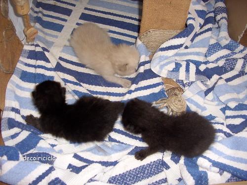 gattini seconda settimana 2