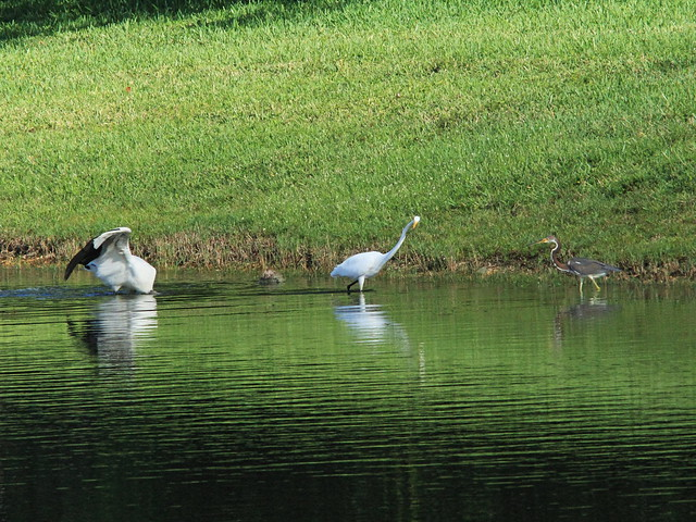 Stork and herons 2-20140912