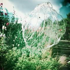 Dans le jardin de MM. Maillot