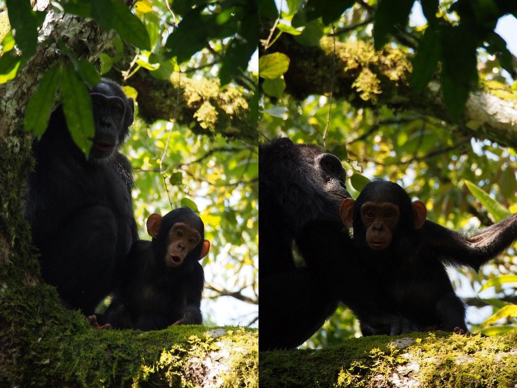 simpanssi5